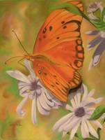 Butterfly among Asters