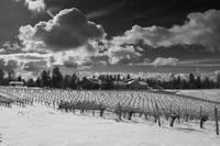 Lava Cap Winery in Winter, Apple Hill,