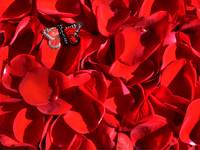 Red rose petals and butterfly 2