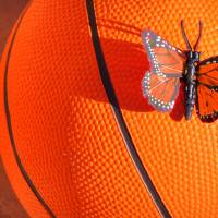 """Orange basketball and butterfly"" by annav"