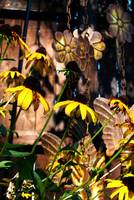 Black Eyed Susan Flowers with Wind Chime