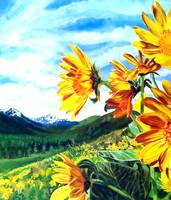 Montana Sunflowers