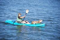 DOG In Kayak