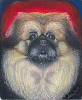 Fozy Bear, Pekingese Dog Portrait