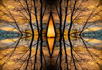 Looking Through The Trees Abstract Fine Art