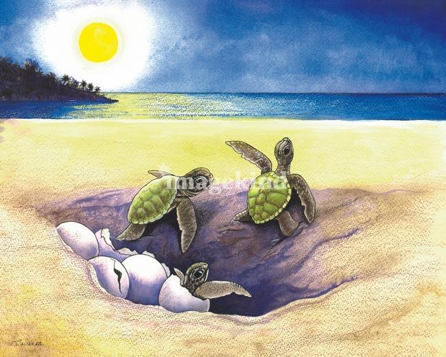 'Hatchlings'  Green Sea Turtles