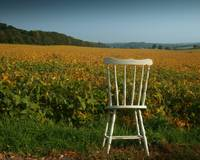 The White Chair, 2
