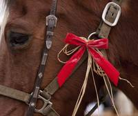 Holiday Bow on Horse