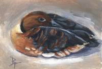 Wandering Whistling Duck aceo