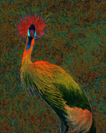 crowned crane by Jane Schnetlage
