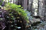 New Life from Old Growth