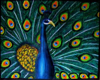 quotpeacockquot oil pastel acrylic on 16x20 canvas by