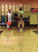 Funny Bowling Dogs