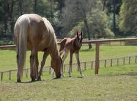 Curious New Foal, Sierra Nevada Foothills