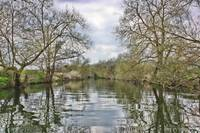 Along The River Avon In Springtime