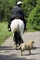 Horse & Dog Walking
