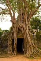 Roots engulfing ruins