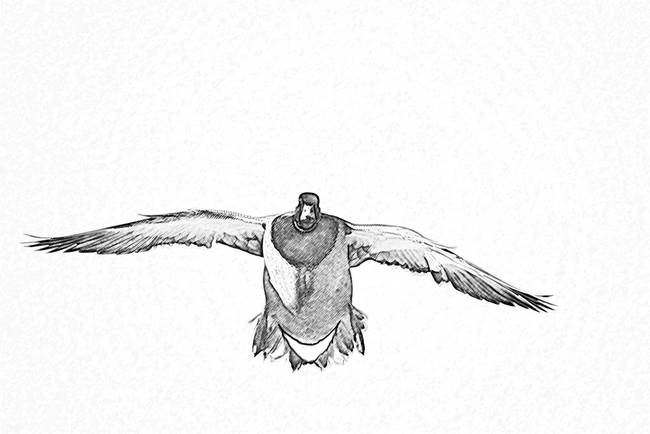 flight duck drawing by daniel teetor