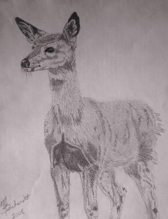 Deer Drawing 4 - Deer by Miranda Barnhardt