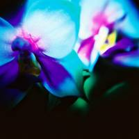 blue, purple, orchid