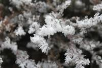 Intricate Frost