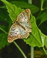 Butterfly on Leaf by Kristen Stein