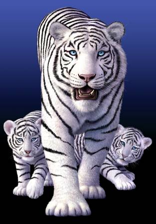 White Tigers by artist Jerry LoFaro. Giclee prints, art prints, animal art, tiger art; from an original illustration