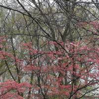 Colors Of Trees Art Prints & Posters by Dan Houser