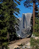 Half Dome Seen Through the Forest