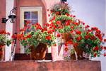 Geraniums At The Top Of The Stairs