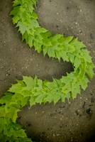 Leaf Chain: Andy Goldsworthy Homage