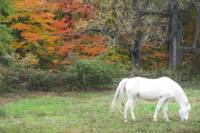White Horse Rainbow Autumn