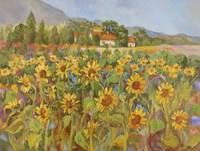 Provence Sunflower Field