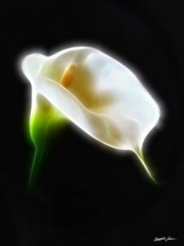 Elegant Calla Lily Flowers 3 Modern by Christopher Johnson