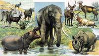 Mammals - various types