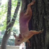 Squirrel On A Tree Art Prints & Posters by Amr Abdelbadee