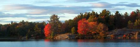 Trees on Lake