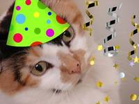 Birthday Party Animal Calico Cat