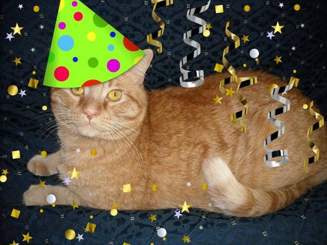 Orange Tabby Cat Birthday Party Animal By Roseann Riggi Knudson