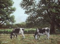 Two Cows in field at Throop
