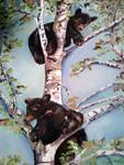 Black Bears Cubs play in a tree
