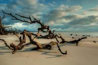 Driftwood on the Sands and Beech Cloudy Sky Jekyll