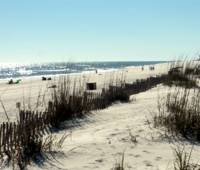 Orange Beach, Alabama image