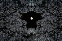 Rorschach Moonlight