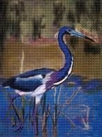 Little Blue Heron Water color