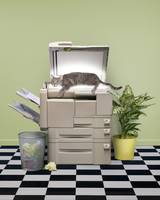 Funny Cat On The Copy Machine
