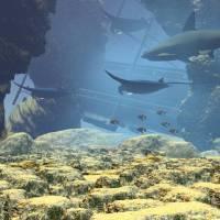 underwater world by William Ballester
