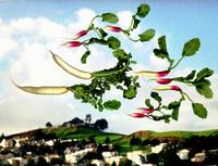 Flock of Radishes Flying West Over Bernal Hill