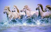 Wild Horses Running Free through the Water