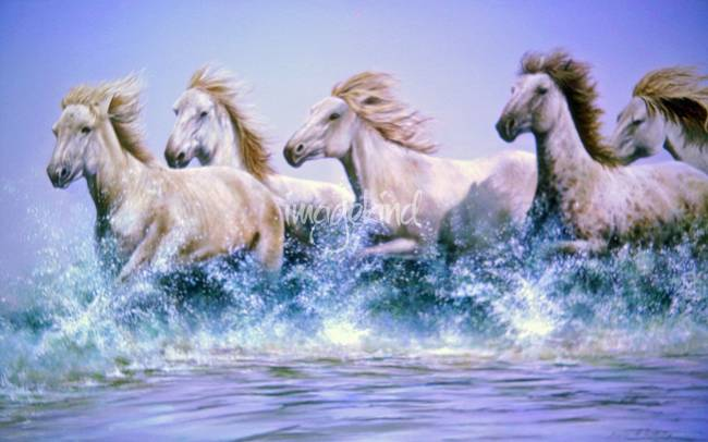 Horse Photography White Horses Running in Water Horse Art